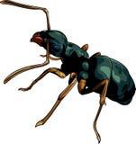 Cartoon ant worker Stock Photo