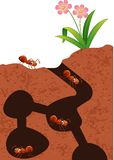 Cartoon ants colony. Illustration of Cartoon ants colony vector illustration