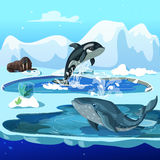 Cartoon Arctic Fauna Template. With walrus orca and whale on winter ice snowy landscape vector illustration Stock Photo