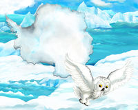 Cartoon arctic owl with continent map Royalty Free Stock Photography