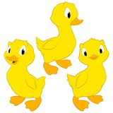 Cartoon Baby Ducks. Isolated objects for design element Royalty Free Stock Photography