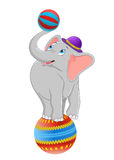 Cartoon baby elephant standing on circus ball Stock Photo