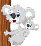Cartoon baby koala on mother's back embracing tree Stock Photography
