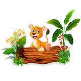 Cartoon baby lion sitting on tree trunk Royalty Free Stock Photos