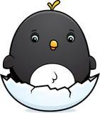 Cartoon Baby Penguin Egg Royalty Free Stock Photos