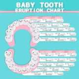 Cartoon baby tooth Stock Image