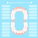 Cartoon baby tooth eruption chart Royalty Free Stock Images