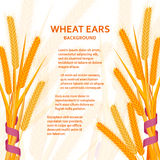 Cartoon background with wheat ears and ribbons.  Colorful vector illustration. Stock Photos