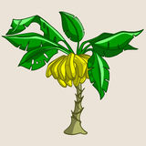 Cartoon banana tree with bananas Stock Photo