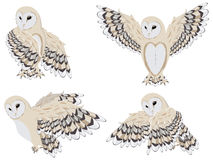 Cartoon Barn Owl. Illustration of cartoon barn owl on white background Stock Image