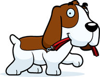 Cartoon Basset Hound Leash Royalty Free Stock Photos