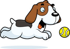 Cartoon Beagle Chasing Ball Stock Images