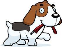 Cartoon Beagle Leash Stock Images