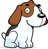 Cartoon Beagle Sitting Stock Photos