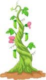 Cartoon bean stalk. Illustration of Cartoon bean stalk royalty free illustration