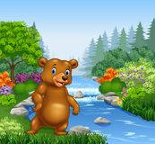 Cartoon bear in Beautiful river in forest Royalty Free Stock Photos