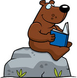 Cartoon Bear Reading Royalty Free Stock Photography