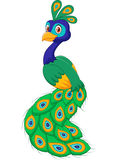 Cartoon beautiful peacock  on white background Royalty Free Stock Photo