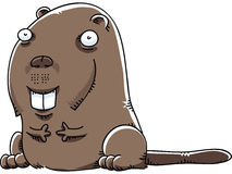 Cartoon Beaver Royalty Free Stock Photos