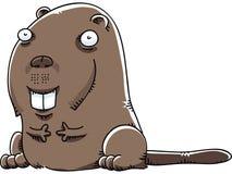 Cartoon Beaver Royalty Free Stock Photos