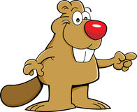 Cartoon beaver pointing Royalty Free Stock Image