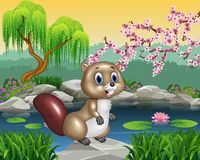 Cartoon beaver posing on the rock Royalty Free Stock Images