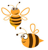 Cartoon bee. Funny cartoon  bee isolated on white Royalty Free Stock Images