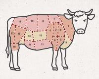 Cartoon beef cut -  butcher pieces Royalty Free Stock Photos