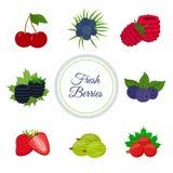 Cartoon berries menu. Raspberry, blackberry, gooseberry, red currant, black currant Stock Photography