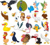 Cartoon bird collection set royalty free illustration