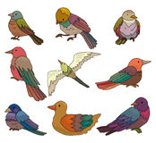 Cartoon bird icon Stock Photography