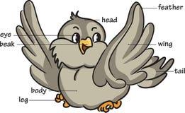 Cartoon bird. Vocabulary of body parts Stock Photos