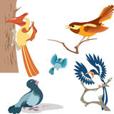 Cartoon birds. The illustration shows a variety of beautiful cartoon birds.Performed on separate layers Royalty Free Stock Images