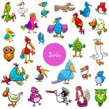 Cartoon birds animal characters big collection. Cartoon Vector Illustration of Funny Birds Animal Characters Big Collection Stock Images