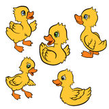 Cartoon birds for kids. Little cute ducklings play and smile. Stock Photo