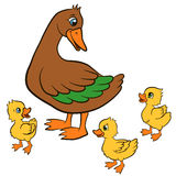 Cartoon birds for kids. Mother duck walks with her ducklings. Stock Photos