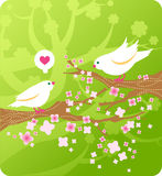 Cartoon birds in love. Spring birds in love on floral background with cherry branches Royalty Free Stock Photography