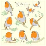 Cartoon birds. Robin set Stock Photos