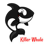 Cartoon black and white killer whale or orca. Black and white spotted killer whale cartoon character leaping out the water to breathe. Cute orca with happy smile Royalty Free Stock Photo