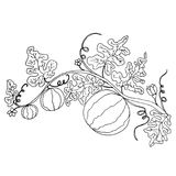 Cartoon black and white  watermelon in foliage and flowers. Isolated.Vector hand drawn illustration striped watermelons, coloring page for adult and children Stock Photography