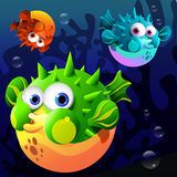 Cartoon blowfish. Illustration of the three puffer fishes under the sea Royalty Free Stock Image