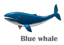 Cartoon blue whale. Cartoon smiling blue whale isolated on white background for nautical, wildlife and ecology design Royalty Free Stock Images