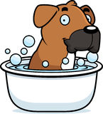 Cartoon Boxer Bath Stock Photography