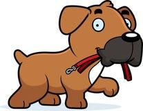 Cartoon Boxer Leash Royalty Free Stock Image