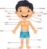 Cartoon Boy Vocabulary part of body Stock Images