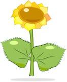 Cartoon bright sunflower Royalty Free Stock Photo