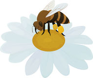 Cartoon brown bee on white flower Royalty Free Stock Photography