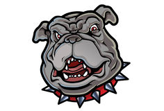 Bulldog Mascot. A cartoon bulldog mascot perfect for sports teams Royalty Free Stock Images