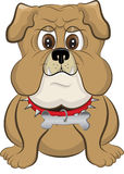Cartoon bulldog Royalty Free Stock Photo