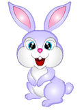 Cartoon Bunny Rabbit Vector Illustration Royalty Free Stock Images